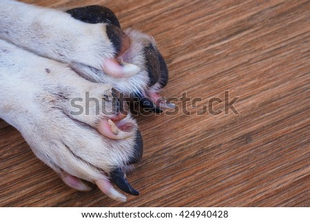 old dog foot on the floor.