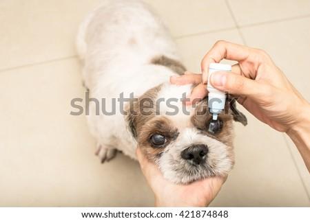 Old dog with women hand vet treats eye - stock photo