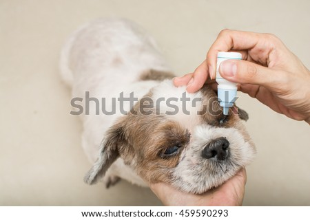 Old dog with women hand vet treats eye