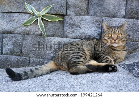 Old domestic cat lying outdoor. - stock photo