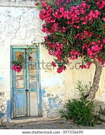 old door and white plastered wall with a tree that gives beautiful red flowers, on a greek Island in the sun - stock photo