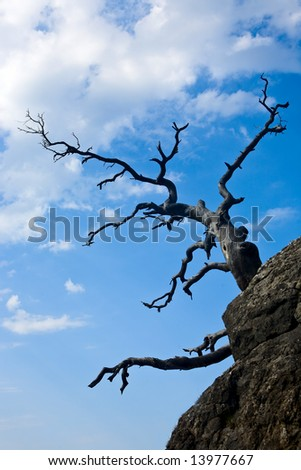 old dry tree on a cloudy sky - stock photo