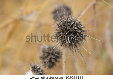 Old dry weeds on a blurred background - stock photo