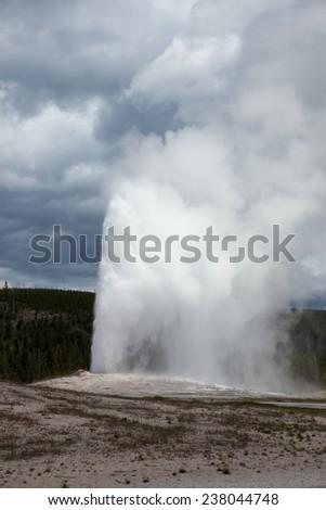 Old Faithful geyser at Yellowstone National Park. - stock photo