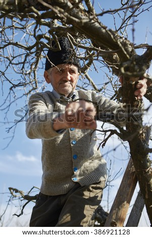 Old farmer trimming the trees with a scissor, traditionally - stock photo