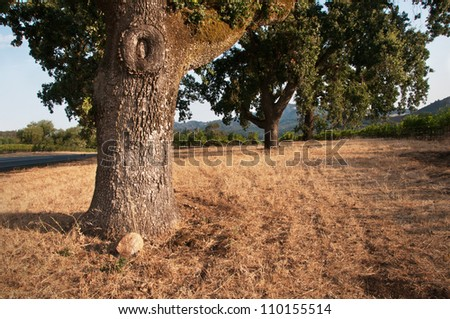 Old Father Oak - stock photo