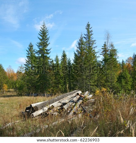 Old felled trees in autumn forest. - stock photo
