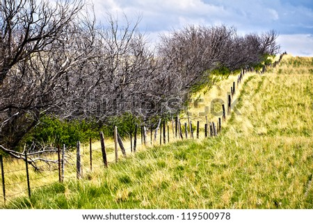 Old Fence Line - stock photo