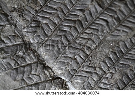 old fern fossil as nice natural background - stock photo