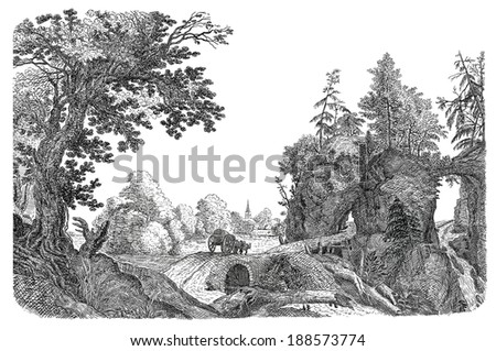 Old forest - stock photo