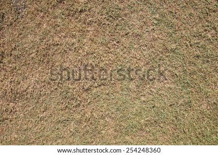 old grass texture , grass back ground - stock photo