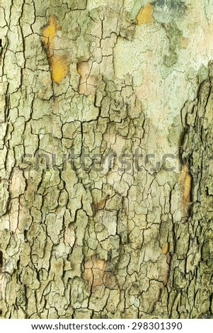 Old green mossy tree bark texture closeup - stock photo