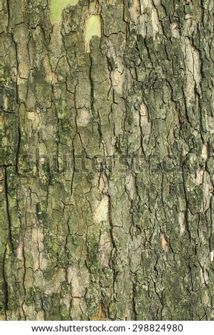 Old green tree bark texture closeup - stock photo
