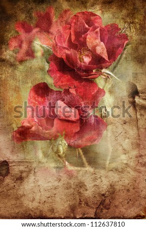 Old grunge vintage postcard with beautiful  roses/Flower Card/Beautiful  rose with buds/Valentines day background - stock photo