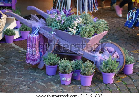 old hand-cart surrounded and covered by lavender flowerings