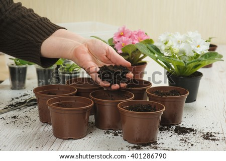 Old hand throws the soil in pot - stock photo