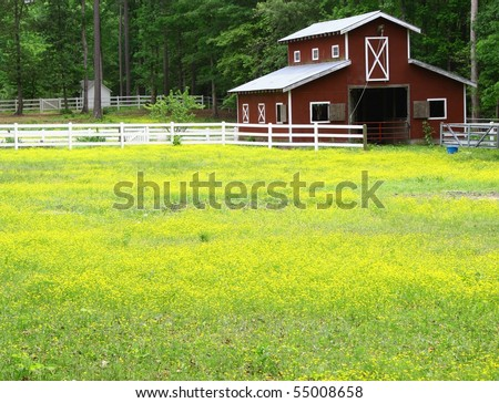 old horse barn in a buttercup field with room for your text - stock photo