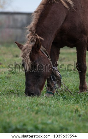 old horse with blonde hair grazing