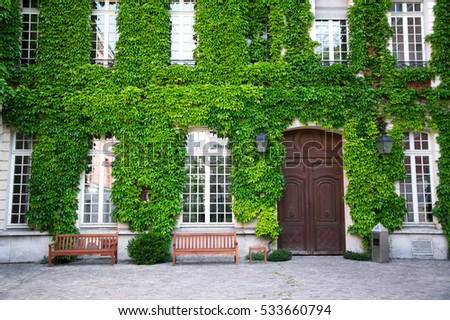 Old house covered by green ivy in Paris, France