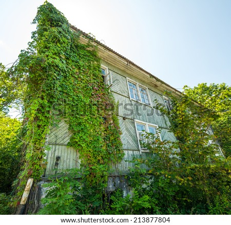Old house covered with ivy. Selective focus on house. - stock photo