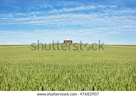 old house in the middle of a field of wheat