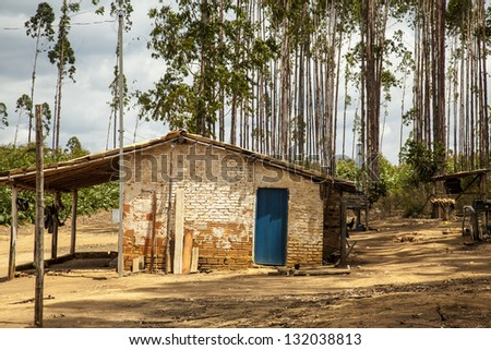 Old house on a farm in Brazil with eucalyptus trees in the background.