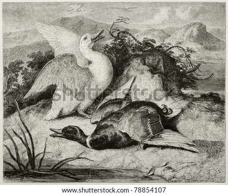 Old illustration of duke and drake, alive and dead. Created by Freeman after Landseer, published on Magasin Pittoresque, Paris, 1850 - stock photo