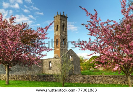 Old irish abbey with the blossom trees - stock photo