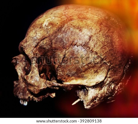 Old jaw less Human Scull for Halloween in orange light. - stock photo