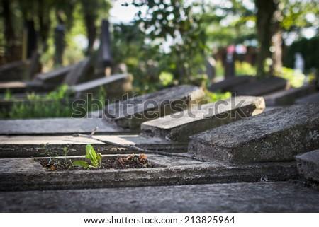 Old jewish cemetery, Liepaja, Latvia. Selective focus on little green plant. - stock photo
