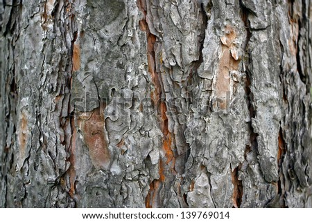 old lime tree bark seamless background pattern brown tree filling the frame