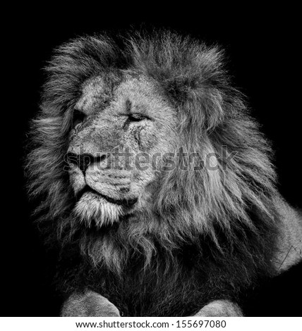 Old Lion - stock photo