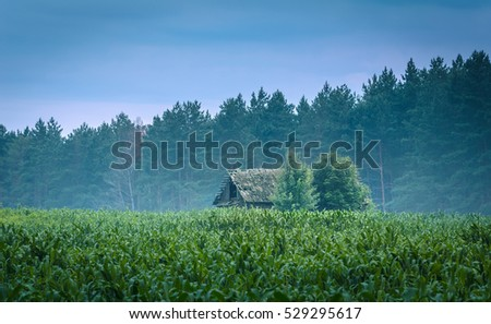 old lonely horror house among the maize field