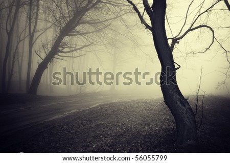 old looking photo of a path through a forest with fog at morning - stock photo