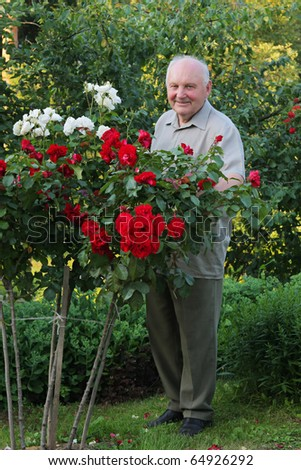 Old man - grower of roses next to rose bush in his beautiful garden. - stock photo