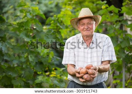 Old man hand with fresh harvested potatoes on green background. Selective focus