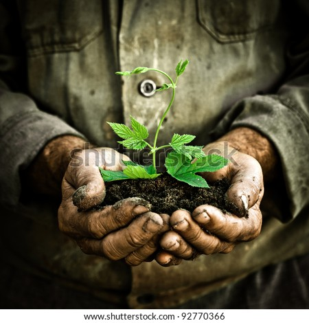 Old man hands holding a green young plant. Symbol of spring and ecology concept - stock photo