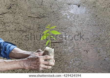 Old man hands holding green young plant with Land dry and cracked ground - stock photo