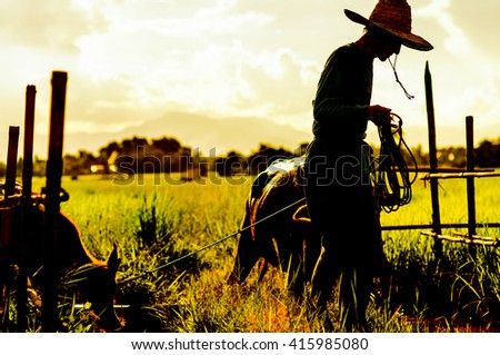 old man leash Buffalo fields countryside evening.