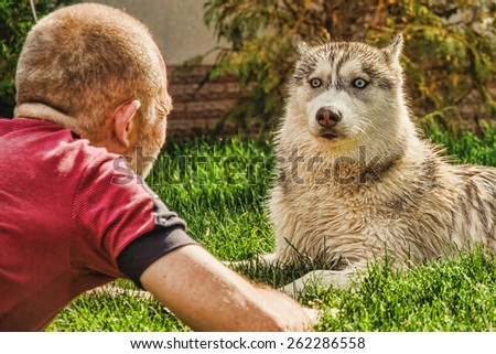 old man playing with a puppy Siberian Husky - stock photo