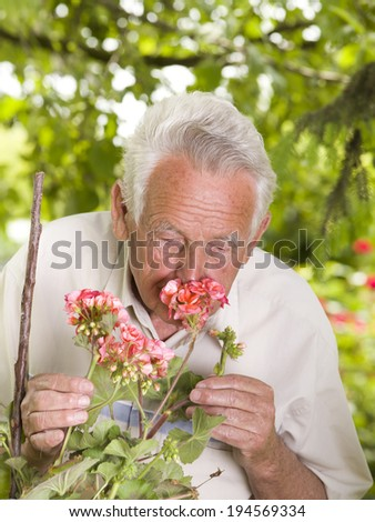 Old man smelling red geranium in his backyard - stock photo