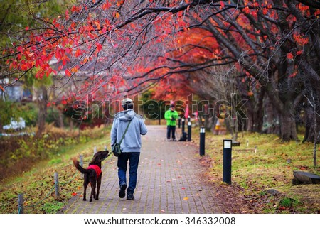 Old man walk with black golden retriever best friend with red autumn leaves at Kawaguchiko, Japan - stock photo