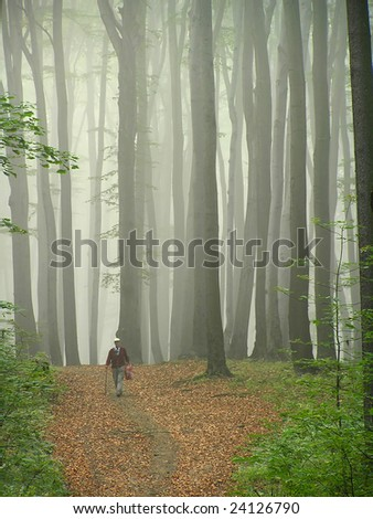 Old man walking in the beech forest.