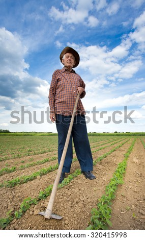 Old man with a hoe standing in the sugar beet field in spring - stock photo