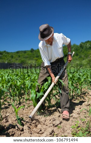 Old man with a hoe weeding in the corn field - stock photo