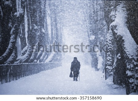 Old man with stick walking along winter avenue rear view.  - stock photo
