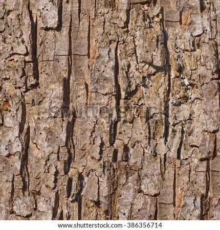 tree park maple - photo #34