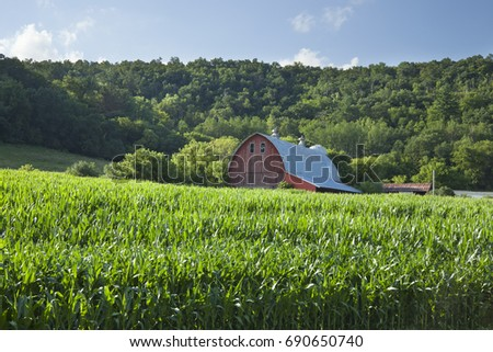 Old midwest red barn near cornfield below wooded hills on a sunny summer afternoon
