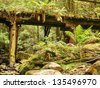 Old mining bridge in Tasmania - stock photo