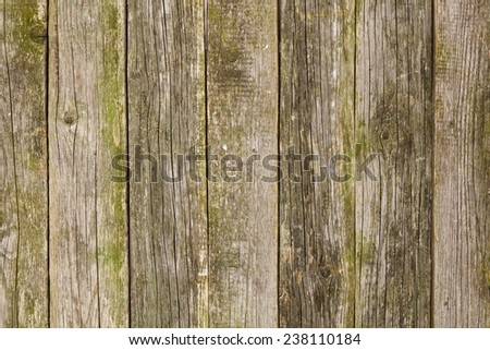 Old mossy wood texture - stock photo